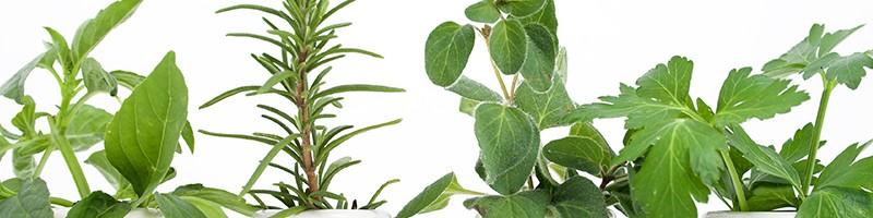 plantas-medicinais-um-alerta-para-o-paciente-oncologico